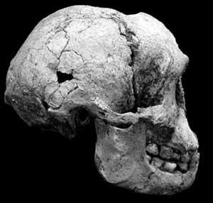LB1 skull