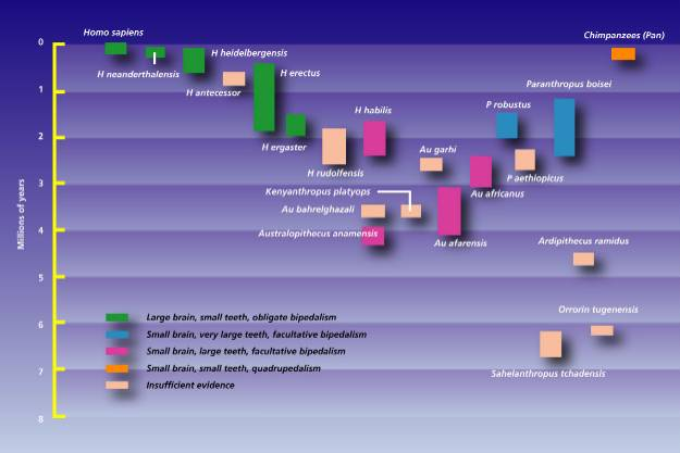 Timeline of hominid species