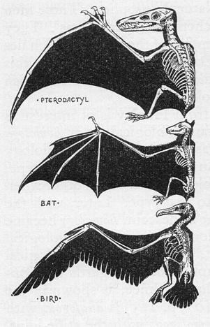 aves gigantes - pterodactilos